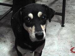 El tratamiento holístico del cáncer canino