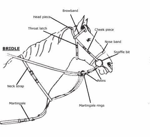 Cómo hacer una brida del caballo