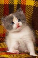 Cómo ayudar a un gatito con los ojos doloridos