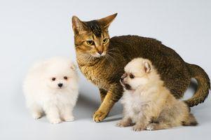 Cómo recaudar dinero para Foster Mascotas