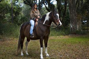 Cuál es el propósito de los frenos de los caballos?