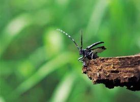 Cómo identificar Indiana Insectos