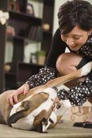 Consejos sobre cómo ser un cuidador de perros en mi casa