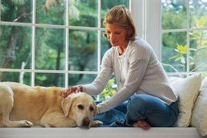 Consejos sobre el logro de un perro lejos de miembros de la familia