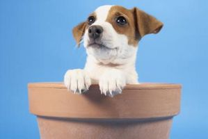 Allanamiento de morada a un cachorro con una caja de arena Balcón Apartamento