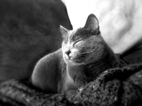 Las dosis de ivermectina para gatos