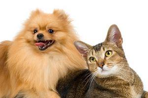 Consejos sobre el cuidado de perros y gatos