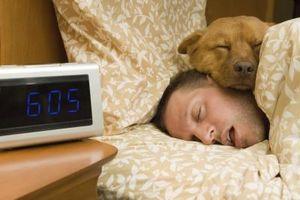 Cómo entrenar a un perro para dormir con usted