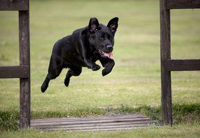La osteopatía para perros
