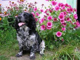 Cómo localizar a un propietario por un número de etiqueta de perro