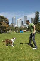 Qué hacer en un parque para perros
