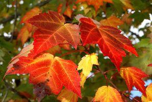 El follaje de otoño cruceros en Canadá y Nueva Inglaterra