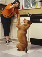Como hacer un sabroso manjar para su perro