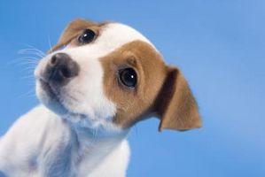 Cuánto tiempo antes de los cachorros recién nacidos Ver de sus ojos recién inaugurados?