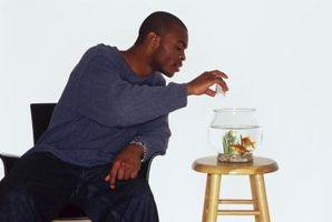 ¿Qué peces se alimentan de camarones salmuera, se secó?