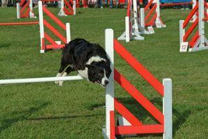 Cómo romper un perro de saltar sobre una cerca