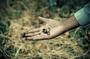 ¿Cuántos corazones funciona una lombriz de tierra tiene?