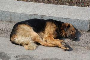 Enfermedades musculares en los perros
