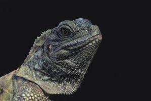 Cómo hacer una jaula para un dragón de agua