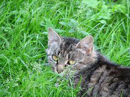 Hierbas para gatos sanos