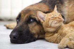 Cinco cosas que los gatos y los perros tienen en común