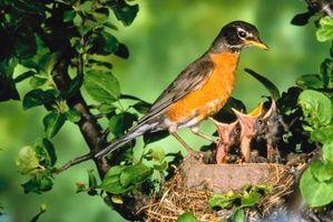 Lo que hacen los insectos que comen las aves?