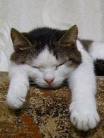 Terramicina para gatos