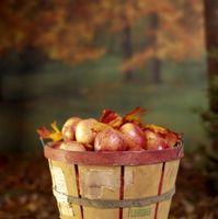 Cómo hacer un comestible de Apple Topiary