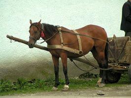 Cómo conectar un caballo a un arnés