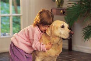 Cómo escoger una raza de perro amigable y gentil
