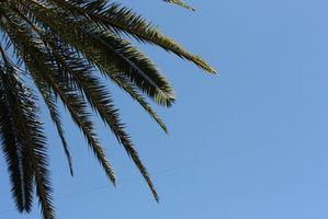 ¿Cómo encontrar las tarifas más económicas de Florida Resorts