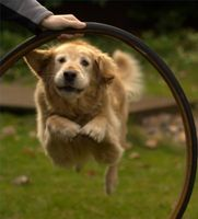 Las comparaciones de los métodos de entrenamiento para perros