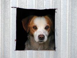Cómo construir una casa de perro con facilidad