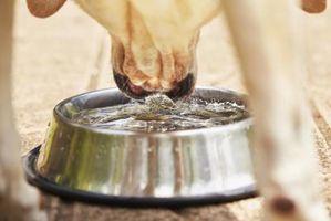 Efectos secundarios de la prednisona en los perros