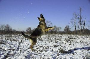 Segura sobre el contador Conjunto Lubricantes para perros