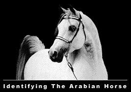 Cómo identificar un caballo árabe