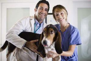 Medicamentos para dar a un perro para la pancreatitis