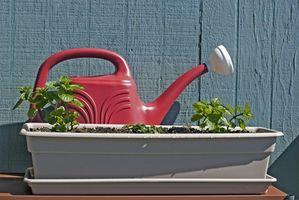 ¿Cómo hacer crecer hierba gatera para Catnip Juguetes hechos en casa