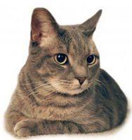 Los alimentos para gatos con insuficiencia renal
