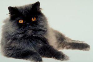 Cómo cuidar de un gato castrado después de una expulsión de los ojos
