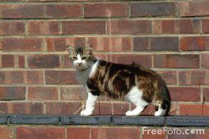 Cómo enseñar a un gato para quedarse