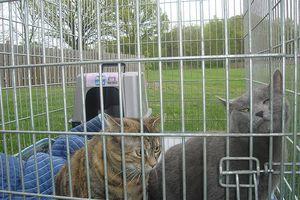 Cómo mantener a los gatos fuera de la casa