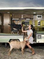 Cómo contener el tren una cabra