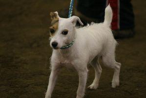 Las exposiciones caninas en Zanesville, Ohio