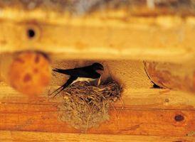 Las aves que se alimentan de moscas y mosquitos