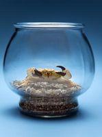 Al igual que lo hacen los cangrejos un fondo de arena o hierba?
