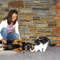 Cómo hacer que su gato no miedo a los perros