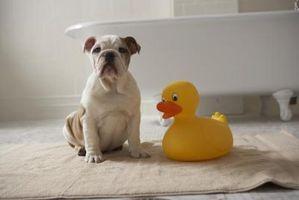 El ácido bórico en polvo Usos para el baño de un perro