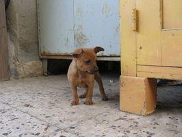 Guía para el cuidado del recién nacido del perrito