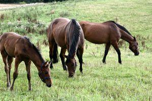 Tipos de Veterinarios Equinos